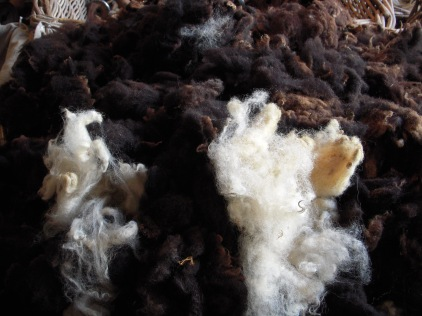Sheep wool - natural state